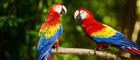 Pájaros que hablan - Bekia Mascotas