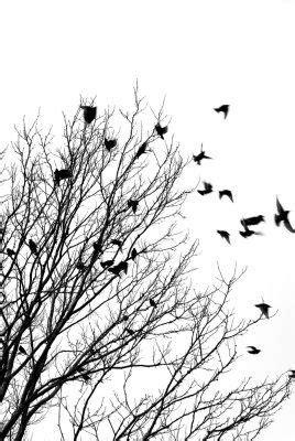 Pájaros volando blanco y negro | PÁJAROS   AVES ...