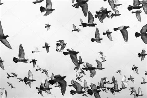 Pajaros Volando Blanco Y Negro | www.pixshark.com   Images ...