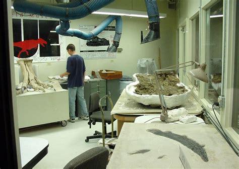 Paleontología de dinosaurios - Wikipedia, la enciclopedia ...