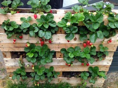 pallet strawberry planter - Marble Gardens | garden ...