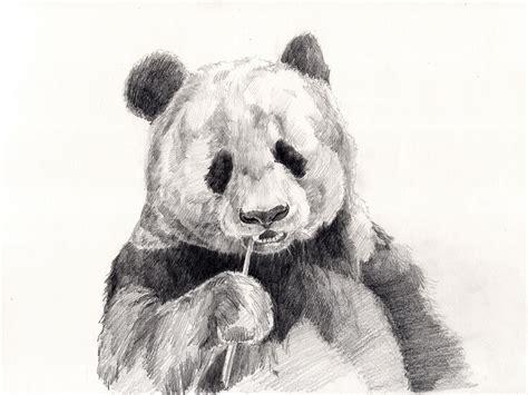 Panda Drawing Pencil · Free photo on Pixabay