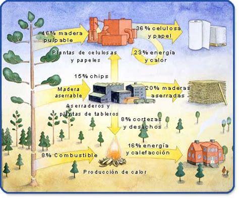 Papelnet ::: Principales Usos de la Madera   El Arbol