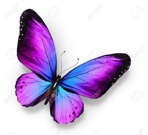 Papillon clipart purple butterfly - Pencil and in color ...
