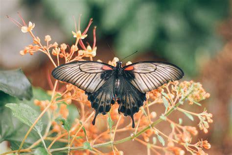 Papillons en liberté – Espace pour la vie. - La Babineau