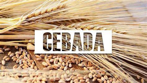 ¿Para Que Sirve la CEBADA? →【Beneficios y propiedades】