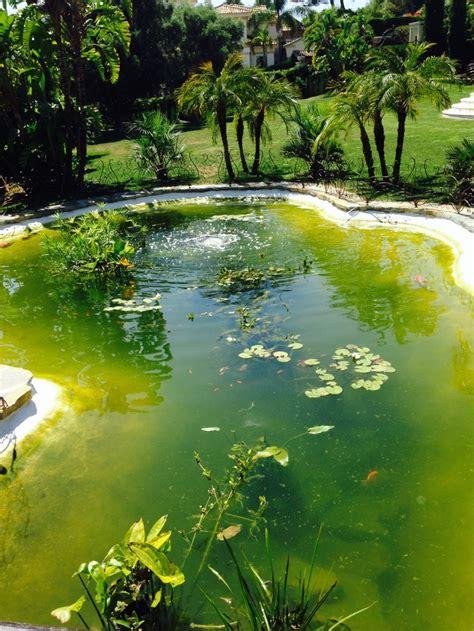 Parámetros de agua en un estanque koi