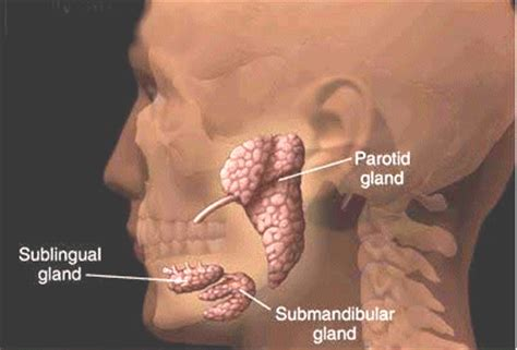 Parotid Gland Cancer