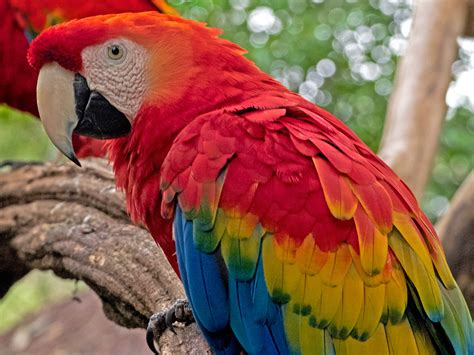 Parque das Aves   Bird Paradise   Bunnik Tours
