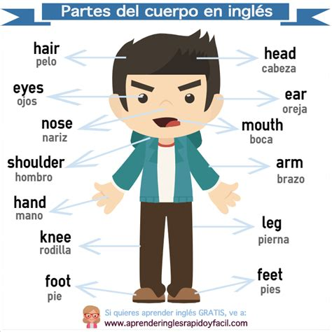 Partes Cuerpo Humano En Espanol | partes del cuerpo ...