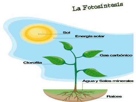 Partes de la fotosíntesis