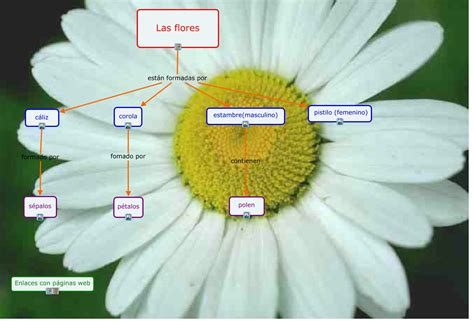 Partes de las flores Marisol Llaquet