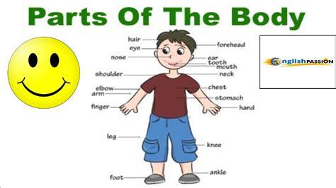 Partes del cuerpo humano en Inglés / Parts of the body ...