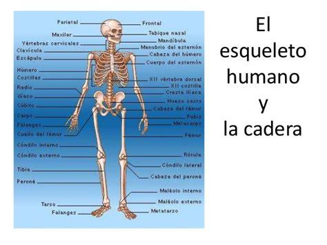 Partes Del Cuerpo Humano Related Keywords   Partes Del ...