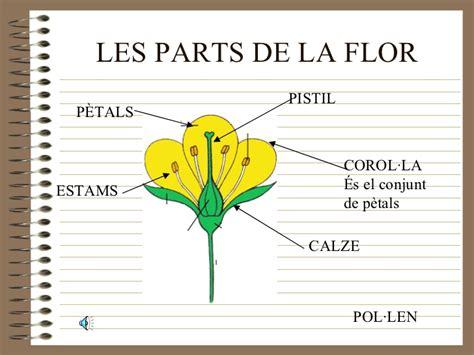 Parts De La Flor