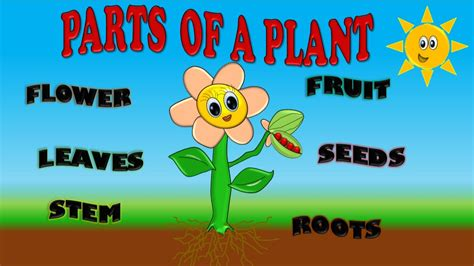 PARTS OF A PLANT FOR KIDS, PARTES DE PLANTA EN INGLES PARA ...