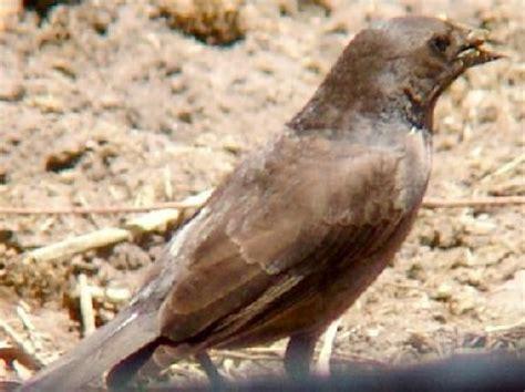 Passeriformes2