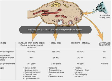 patologia b comision 2: Tumores de ovario