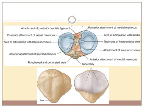 Patología de rodilla: Meniscos y Ligamentos.