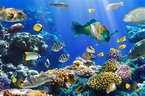 Peces de colores en el fondo marino (74915)