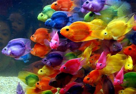peces de colores | Siempre[en]medio