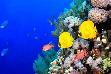 Peces de colores tropicales (77990)