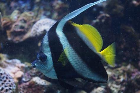 Peces para un acuario comunitario