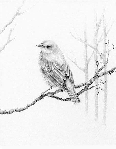 pencil drawings of birds | Bird Drawing Pencil Drawing ...