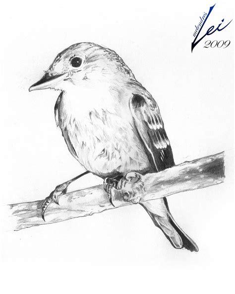 Pencil Drawings: Pencil Drawings Of Birds