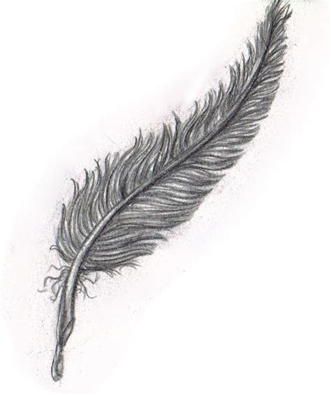Pencil Sketch: Black Feather by Yako on DeviantArt