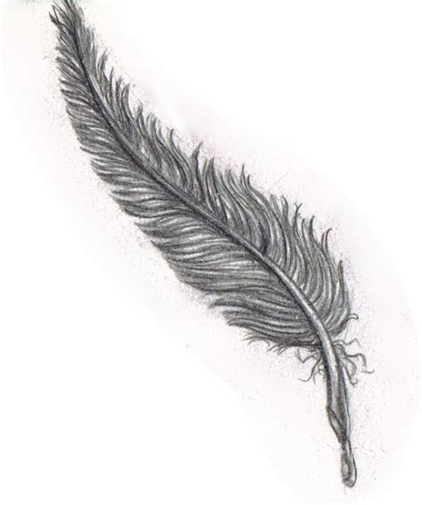 Pencil Sketch Of Feather Pencil Drawings Of Feathers ...