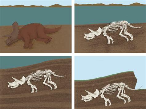 Pequeños Alquimistas: ¿Qué es un paleontólogo y qué es un ...