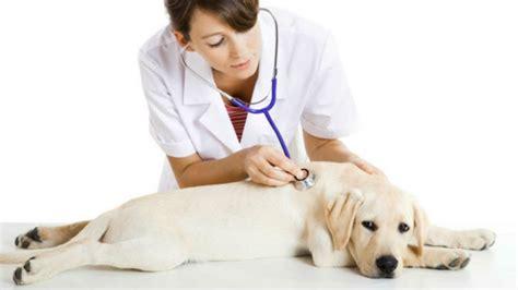 Perfiles de carrera: ¿Qué hace un veterinario ...