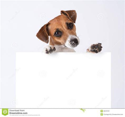 Perro con el cartel imagen de archivo. Imagen de looking ...