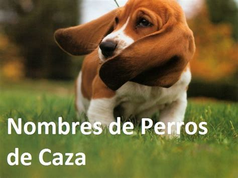 Perros De Caza   Tattoo Design Bild