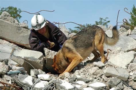 Perros de rescate: búsqueda de personas | PerrosdeBusqueda