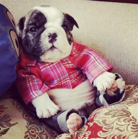 Perros pequeños y muy adorables que te romperán el corazon