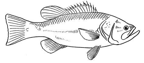 Pescado #95 (Animales) – Páginas para colorear