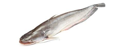 Pescado Bagre