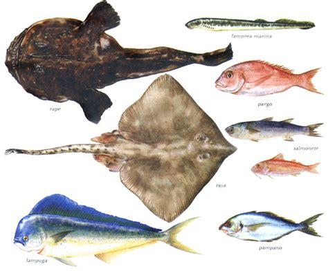 Pescados de mar   Imagui