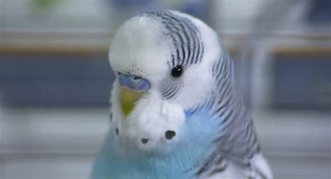 Pet Bird Names | www.pixshark.com - Images Galleries With ...