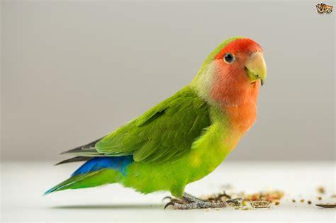 Pet Birds – WeNeedFun