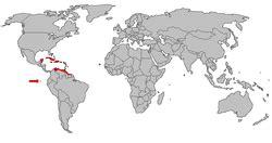 Phoenicopterus ruber   Wikipedia, la enciclopedia libre