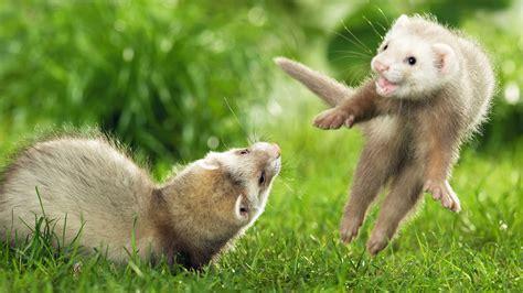 Photography NATURE WORLD PEOPLE BEAUTY: Cute Animals HD ...