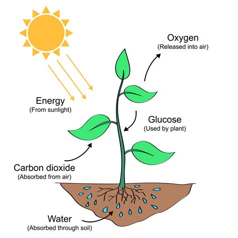 Photosynthesis — The Productive Teacher