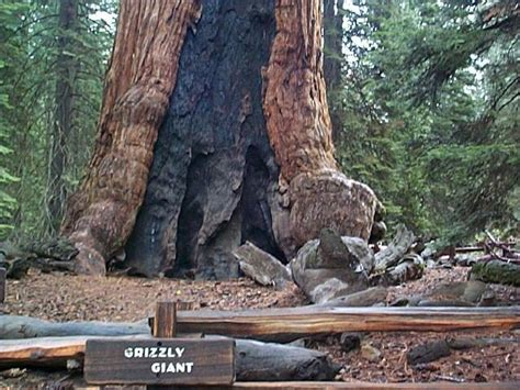 Pictures from Mariposa Grove in Yosemite National Park