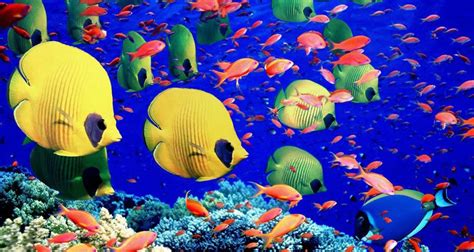 Pictures of Fishes in The Sea on Animal Picture Society