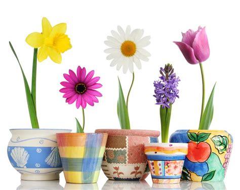 Pictures of Seasonal Spring Flowers [Slideshow]
