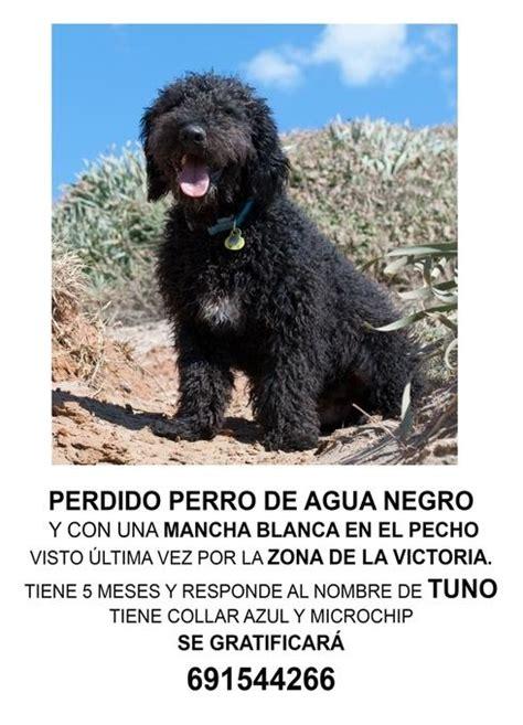 Pierden a su perro en Málaga a punto de irse de viaje y lo ...