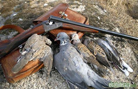 Pin Caza aves on Pinterest